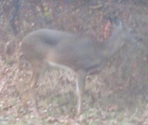 Deer3s